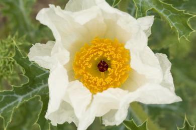 sloat06_northr_cactus_flower_0