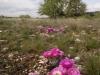 kaehler06_stowers_cactus_blooms