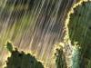 lee06_losmad_prickly_pear_rain