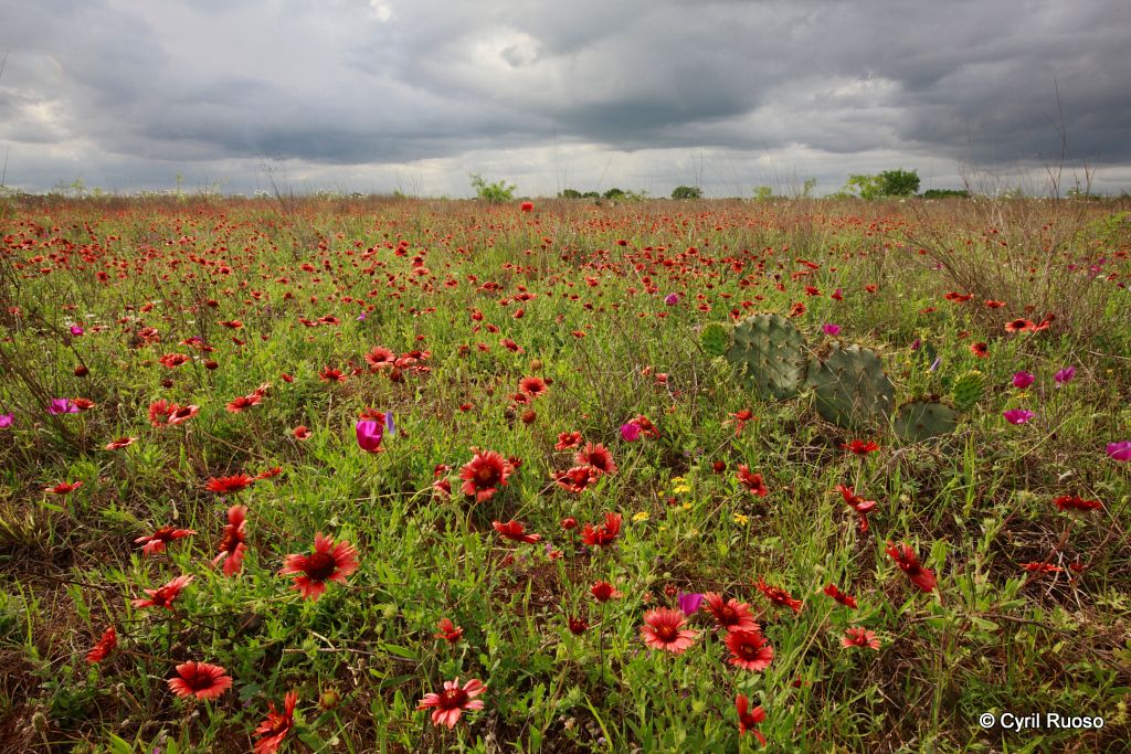Landscape of prairie in south texas in spring (april)