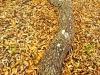 Live Oak - © Dave Welling