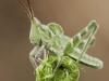 wood_selah_grasshopper