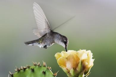 wood_selah_hummingbird