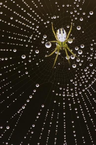 wood_selah_spider