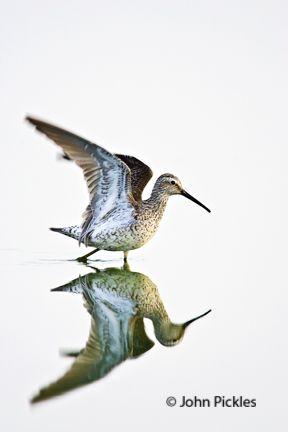 jpickles-bird