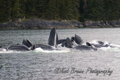 alaskan_song_2008_whales_-_wildlife_043-640x480