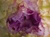 keeler_bcna_cactus_flower