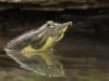 keeler_bcna_turtle