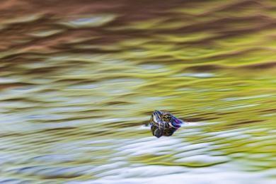 richard_jsb_turtle