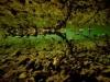 richard_jsb_green_algae