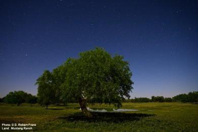 © D. Robert Franz - Mustang Ranch