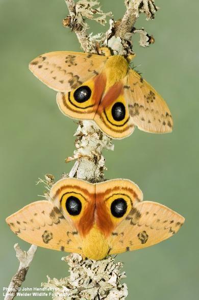 © John Hendrickson - Rob & Bessie Welder Wildlife Foundation