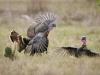 francis_redcor_turkey