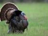 sloat_pipe_turkey
