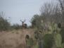 Rancho Las Tejanas - Jim Winch