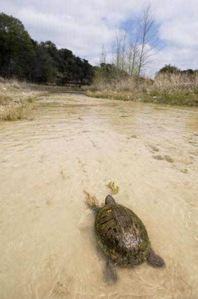 kaehler_stowers_turtle